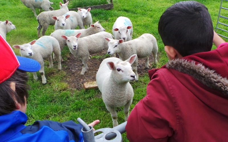 A colour image of children with sheep and lambs as part of the Country Trust Hampshire Farm Discovery Programme Supported by The Ellis Campbell Foundation