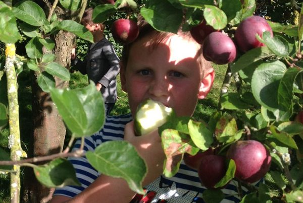 A colour image of a boy eating an apple amongst apple trees as part of The Country Trust Hampshire Farm Discovery Programme Supported by The Ellis Campbell Foundation